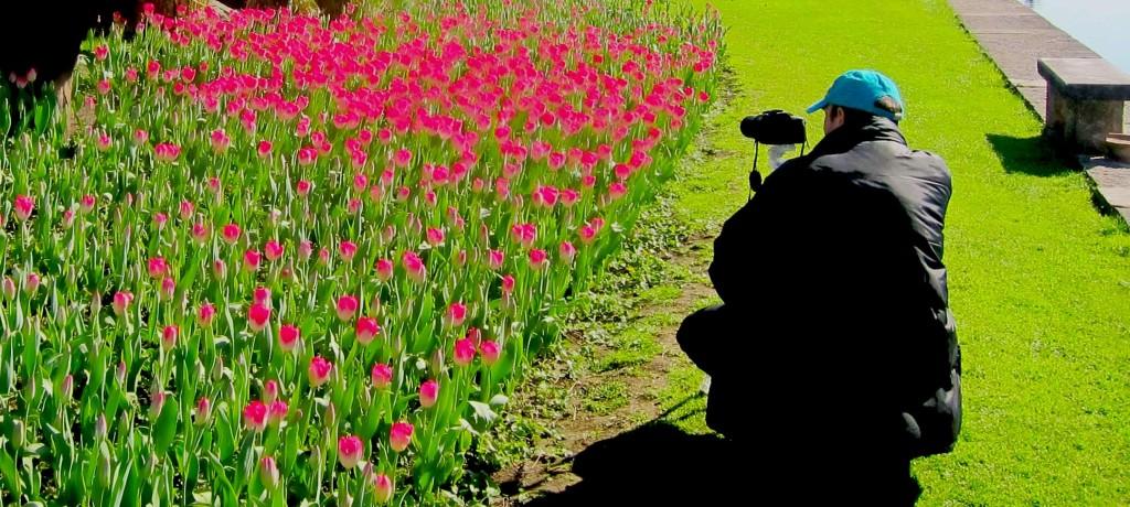 Tulipanomania Contest Fotografico - Parco Giardino Sigurtà
