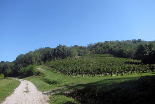 Le colline del Collio