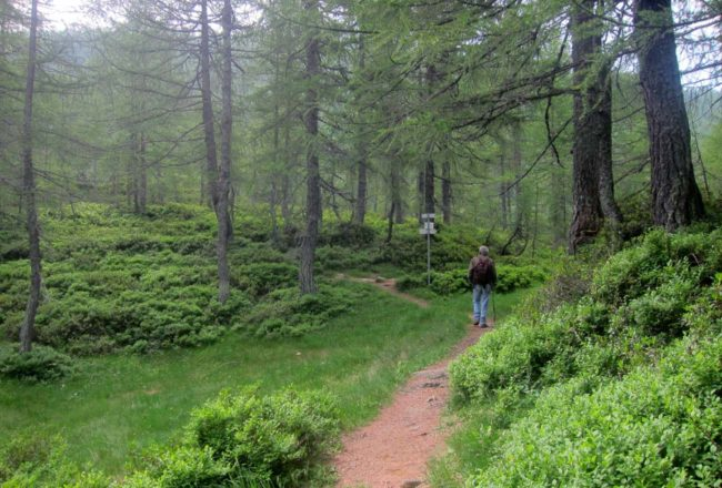 Tra i boschi a Crampiolo