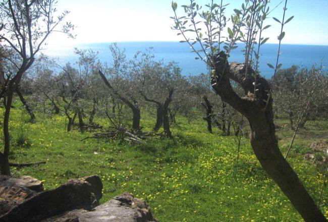 La Francesca: sentieri dei dintorni