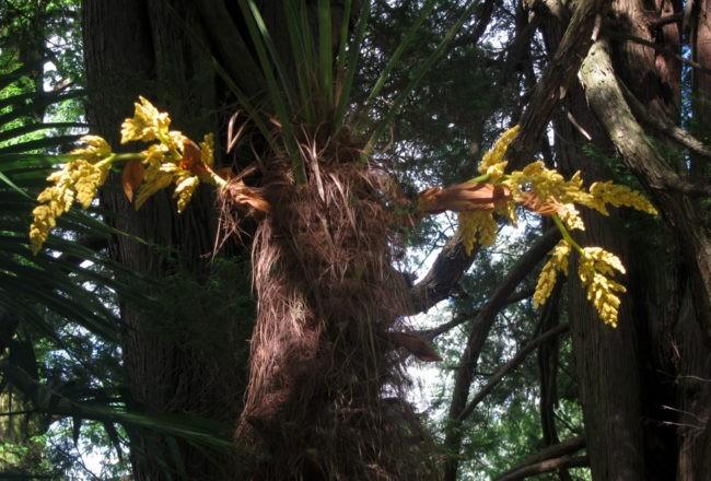 Gemme sui tronchi a Villa Taranto sul Lago Maggiore