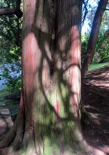 Bellissimi i colori di questo tronco a Villa Taranto