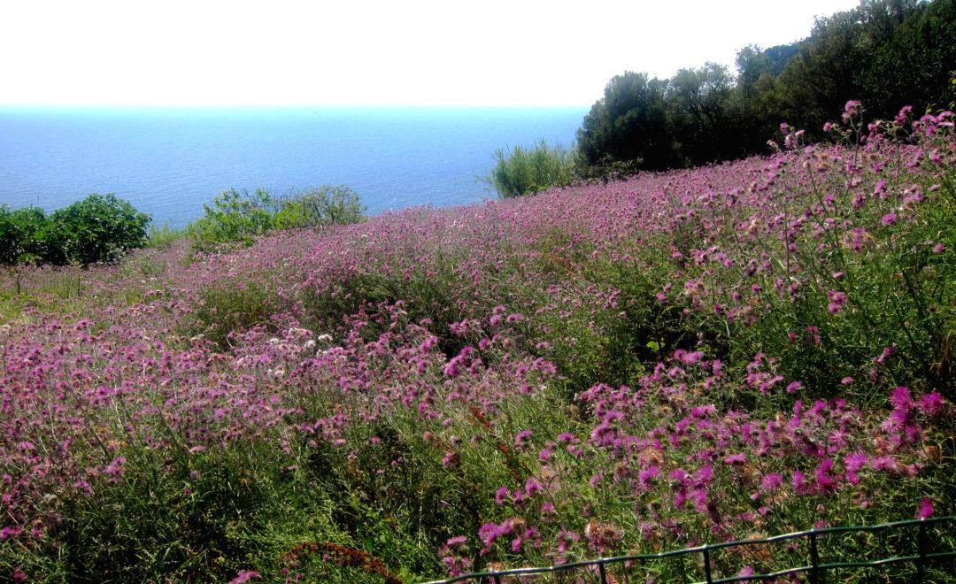 Ca 39 di mare eccellenze rurali a framura vagabondi in italia - Diversi tipi di turismo ...