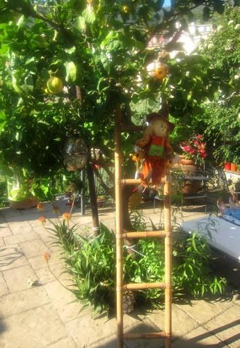 corniglia e terrasse