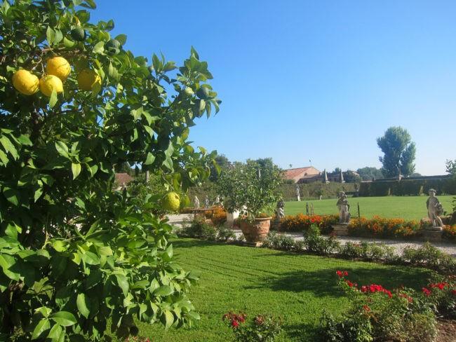 dominio di bagnoli coltivazione piante antiche