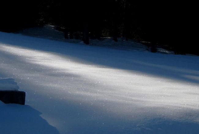 neve nel bosco