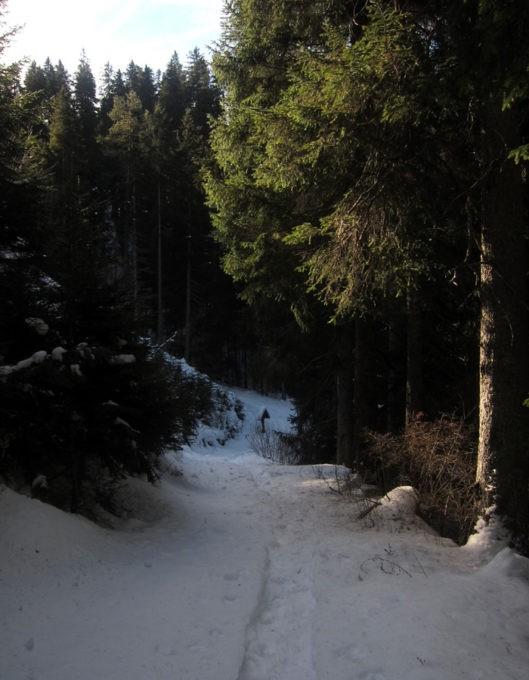 via crucis nel bosco