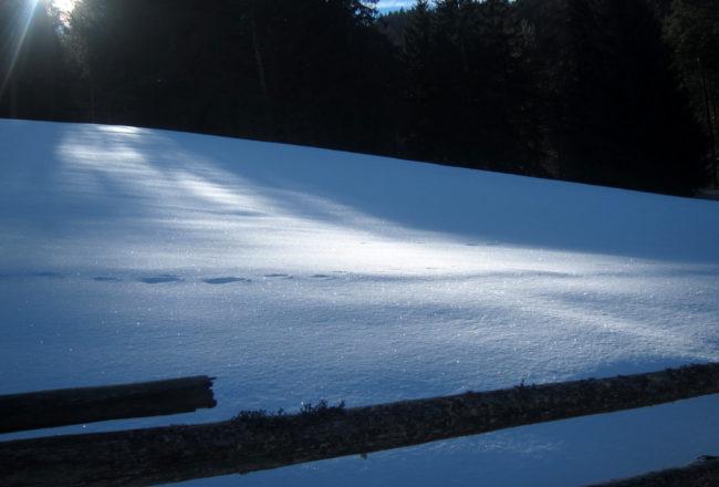 tracce nella neve
