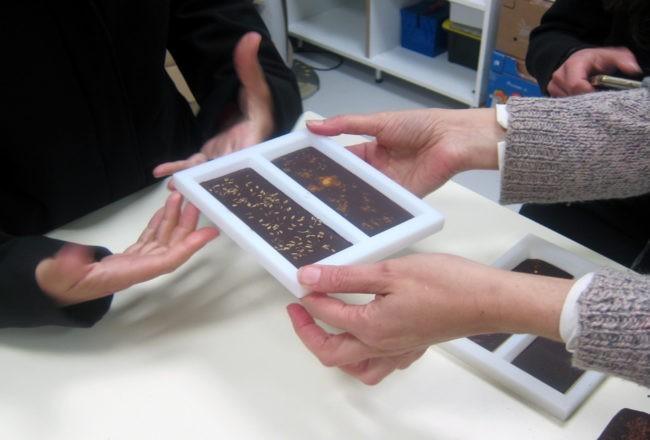tavolette cioccolato modica