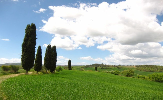 cipressi in val d'orcia