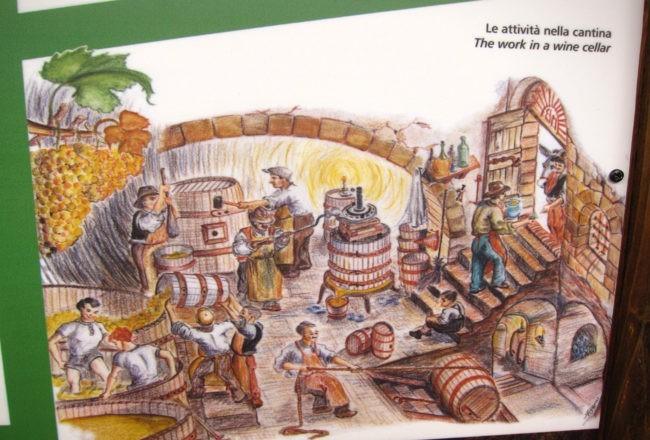 lavorazione del vino a pitigliano