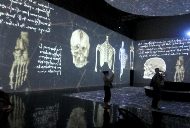 studi di anatomia di leonardo