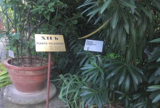 piante velenose orto botanico padova