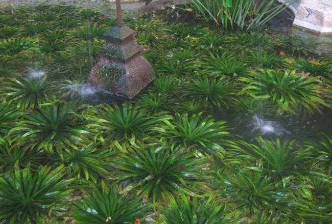 piante acquatiche orto botanico padova