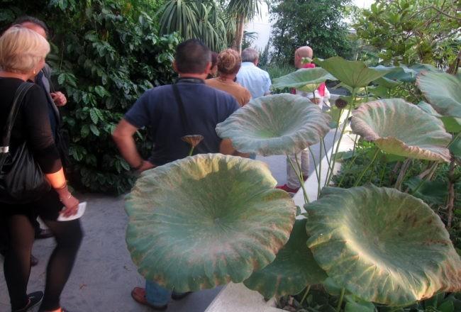 piante tropicali orto botanico padov