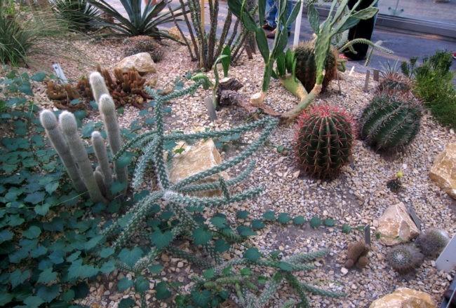 piante clima arido orto botanico padova