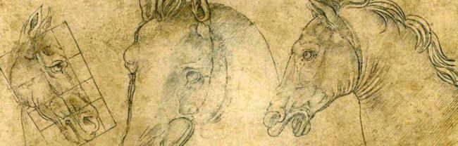 disegno cavallo leonardo
